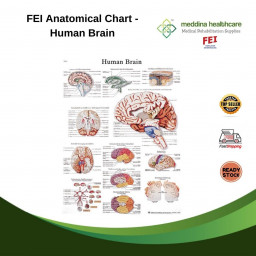 FEI Anatomical Chart -...